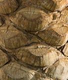 Ο φλοιός του φοίνικα Στοκ Εικόνες