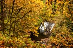 Ο χαμηλότερος Βορράς εμπίπτει στο φθινόπωρο στο ασημένιο κρατικό πάρκο πτώσεων, Όρεγκον, στοκ εικόνες