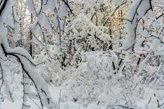 Ο χαμηλός χειμερινός ήλιος λάμπει dimly μέσω impassable, συσσωρευμένος με στοκ φωτογραφίες