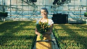 Ο χαμογελώντας κηπουρός μυρίζει τις κίτρινες τουλίπες και εξετάζει μια κάμερα απόθεμα βίντεο