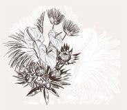 Ο χαραγμένος αφηρημένος κομψός γάμος bakground λουλουδιών διανυσματικός γιορτάζει εκλεκτής ποιότητας anthurium απεικόνιση αποθεμάτων