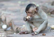 Ο χαριτωμένος μικρός πίθηκος τρώει την μπανάνα Στοκ εικόνες με δικαίωμα ελεύθερης χρήσης