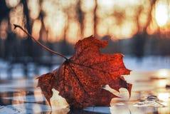 Ο χειμώνας έρχεται Στοκ Φωτογραφίες