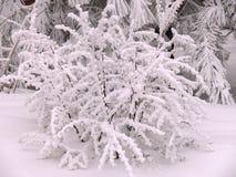 Ο χειμώνας έχει καλύψει έναν θάμνο με μια κάλυψη χιονιού στοκ φωτογραφία με δικαίωμα ελεύθερης χρήσης