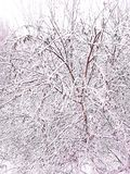 Ο χειμώνας ήρθε, το πρώτο χιόνι αφόρησε την πρώτη ημέρα του Δεκεμβρίου στοκ εικόνες με δικαίωμα ελεύθερης χρήσης