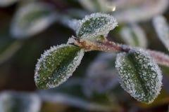 Ο χειμώνας βγάζει φύλλα Στοκ εικόνα με δικαίωμα ελεύθερης χρήσης