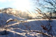 Ο χειμώνας, χιόνι βρίσκεται σε μια μαυρισμένη λεπίδα της χλόης Στοκ Εικόνες