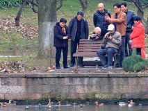 Ο χειμώνας yuanyang στο hangzhou, και παίρνει μαζί με τους ανθρώπους στενούς, ξένοιαστος στοκ εικόνες