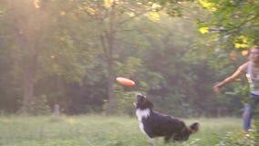 Ο χειριστής κοριτσιών ρίχνει τα πορτοκαλιά τρεξίματα κόλλεϊ συνόρων frisbee και σκυλιών μετά από το στον πράσινο χορτοτάπητα, σε  απόθεμα βίντεο