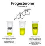 Ο χημικός μοριακός τύπος της προγεστερόνης ορμονών Θηλυκή ορμόνη φύλων Μείωση και αύξηση της προγεστερόνης ελεύθερη απεικόνιση δικαιώματος