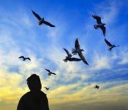 Ο χορός ηλιοβασιλέματος seagulls προσέχει τη μεγάλη ευχαρίστηση Στοκ Φωτογραφίες