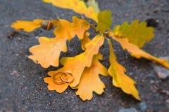 Ο χρυσός γάμος δύο είναι τα φύλλα του δέντρου Στοκ εικόνες με δικαίωμα ελεύθερης χρήσης