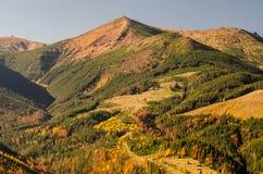 ο χρυσός φθινοπώρου βγάζει φύλλα μερικά δέντρα Στοκ Εικόνες