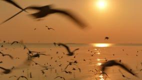 Ο χρυσός ωκεανός με πολλά seagulls στο ηλιοβασίλεμα φιλμ μικρού μήκους