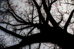Ο χρόνος άνοιξη… αυξήθηκε φύλλα, φυσική ανασκόπηση στοκ εικόνες