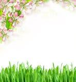 Ο χρόνος άνοιξη… αυξήθηκε φύλλα, φυσική ανασκόπηση Άνθηση δέντρων της Apple και πράσινη χλόη Στοκ Εικόνες