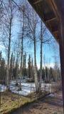 Ο χρόνος άνοιξη… αυξήθηκε φύλλα, φυσική ανασκόπηση Στοκ εικόνες με δικαίωμα ελεύθερης χρήσης