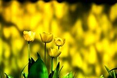 Ο χρόνος άνοιξη, ζώα, φύση ξυπνά, τα πουλιά τραγουδούν, τα λουλούδια αρχίζουν να ανθίζουν Μακρο πυροβολισμός του λαμπρά κίτρινου  Στοκ φωτογραφία με δικαίωμα ελεύθερης χρήσης