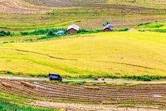 Ο χρόνος συγκομιδών ωριμάζει επάνω τα πεζούλια ρυζιού των ανθρώπων μειονότητας H'mong στο Υ Ty, λαοτιανό CAI, Βιετνάμ Στοκ φωτογραφία με δικαίωμα ελεύθερης χρήσης