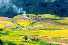 Ο χρόνος συγκομιδών ωριμάζει επάνω τα πεζούλια ρυζιού των ανθρώπων μειονότητας H'mong στο Υ Ty, λαοτιανό CAI, Βιετνάμ Στοκ Εικόνα