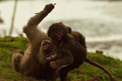 Ο χρόνος ψυχαγωγίας του στο ζωολογικό κήπο Στοκ Εικόνα