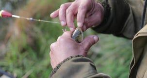 Ο ψαράς βγάζει τα ψάρια από την κινηματογράφηση σε πρώτο πλάνο γάντζων απόθεμα βίντεο