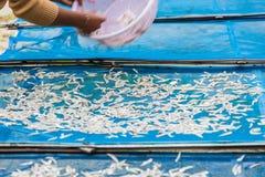 Ο ψαράς ξεραίνει τα μικρά ψάρια Στοκ φωτογραφία με δικαίωμα ελεύθερης χρήσης
