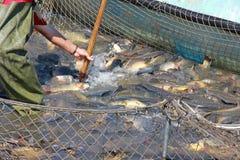 Ο ψαράς πιάνει ένα ψάρι Στοκ Φωτογραφίες