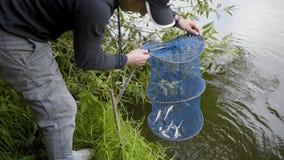 Ο ψαράς τραβά τα ψάρια από το δίχτυ απόθεμα βίντεο