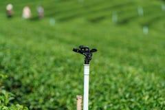 Ο ψεκαστήρας κινηματογραφήσεων σε πρώτο πλάνο στην πράσινη φυτεία τσαγιού είναι πότισμα συστημάτων Στοκ φωτογραφία με δικαίωμα ελεύθερης χρήσης