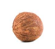Ολόκληρη μια καρύδα που απομονώνεται πέρα από το φωτεινό υπόβαθρο Θερινά φρούτα για τα gourmets Νόστιμα φυσικά συστατικά Χορτοφάγ Στοκ Φωτογραφίες