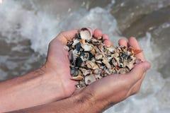 Ολόκληρη χούφτα των μικρών κοχυλιών θάλασσας Στοκ εικόνες με δικαίωμα ελεύθερης χρήσης