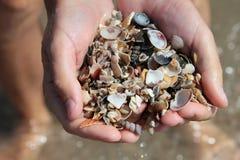 Ολόκληρη χούφτα των μικρών κοχυλιών θάλασσας Στοκ φωτογραφία με δικαίωμα ελεύθερης χρήσης