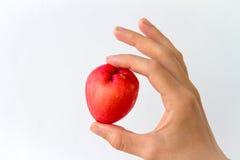 Ολόκληρος αυξήθηκε Apple υπό εξέταση Στοκ Εικόνες