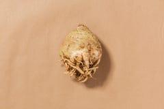 Ολόκληρο ακατέργαστο σέλινο σε ένα υπόβαθρο της Tan Στοκ Φωτογραφίες