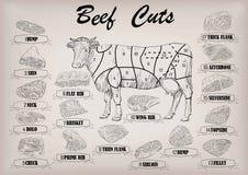 Ολόκληρο σχέδιο s infographics μερών περικοπών περικοπών σφαγίων ταύρων αγελάδων βόειου κρέατος Στοκ εικόνες με δικαίωμα ελεύθερης χρήσης
