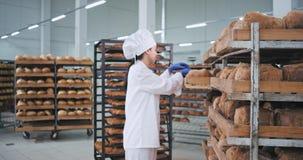 Ο όμορφος αρτοποιός γυναικών τοποθετεί το ψωμί στη διαταγή σχετικά με τα ράφια αυτή που φορά όμορφο άσπρο έναν ομοιόμορφο, αρτοπο απόθεμα βίντεο