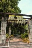 Ο όμορφος κήπος trellises για την αναρρίχηση φυτεύει με την ένωση των άσπρων λουλουδιών Wisteria Στοκ φωτογραφία με δικαίωμα ελεύθερης χρήσης