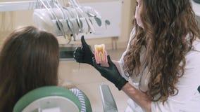 Ο όμορφος μακρυμάλλης οδοντίατρος γιατρών brunette σε μια ιατρική σάλτσα κρατά στα χέρια ενός προτύπου των ανθρώπινων δοντιών και φιλμ μικρού μήκους