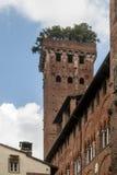 Ο όμορφος μεσαιωνικός πύργος Guinigi με τα δρύινα δέντρα ακροποταμιών στην κορυφή, Lucca, Τοσκάνη, Ιταλία Στοκ φωτογραφία με δικαίωμα ελεύθερης χρήσης