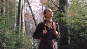 Οδοιπόρος γυναικών που περπατά στο ίχνος στα ξύλα πεύκων απόθεμα βίντεο