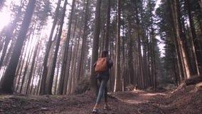 Οδοιπόρος γυναικών που περπατά στο ίχνος στα ξύλα πεύκων φιλμ μικρού μήκους