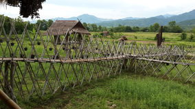 Ο όμορφος τομέας ρυζιού στην επαρχία γιαγιάδων, Ταϊλάνδη Στοκ εικόνα με δικαίωμα ελεύθερης χρήσης