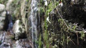 Ο όμορφος τροπικός καταρράκτης ζουγκλών στις άγριες δασικές αλλαγές εστιάζει από το βρύο στις πέτρες κίνηση αργή 3840x2160 απόθεμα βίντεο