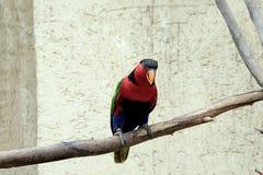 Ο όμορφος χρωματισμένος παπαγάλος κάθεται σε έναν κλάδο, πουλί, ζώο στοκ φωτογραφία με δικαίωμα ελεύθερης χρήσης