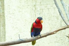 Ο όμορφος χρωματισμένος παπαγάλος κάθεται σε έναν κλάδο, πουλί, ζώο στοκ εικόνες με δικαίωμα ελεύθερης χρήσης