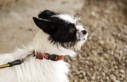 Οδός σκυλιών κυνηγόσκυλων Στοκ Εικόνα