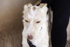 Οδός σκυλιών κυνηγόσκυλων Στοκ φωτογραφία με δικαίωμα ελεύθερης χρήσης