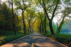 Οδός φθινοπώρου στοκ φωτογραφία