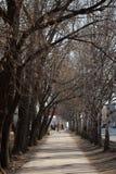 Οδός Blucher, Yekaterinburg στοκ εικόνες με δικαίωμα ελεύθερης χρήσης